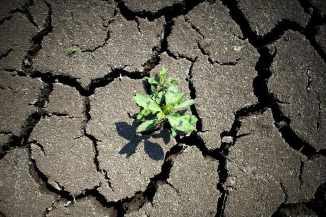 Klimasozialismus